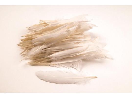 Peří dekorační bílé (100ks)