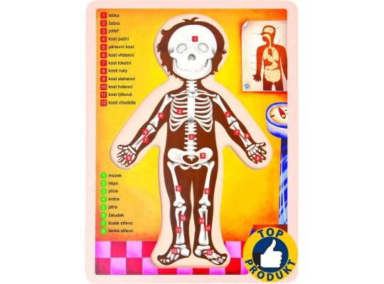 Puzzle dřevěné-lidské tělo