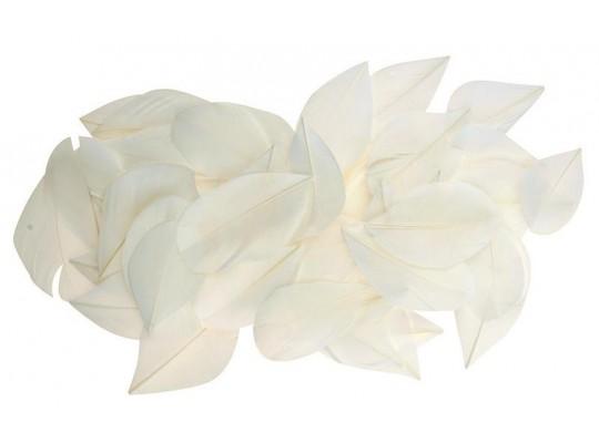 Peří dekorační-listy bílé