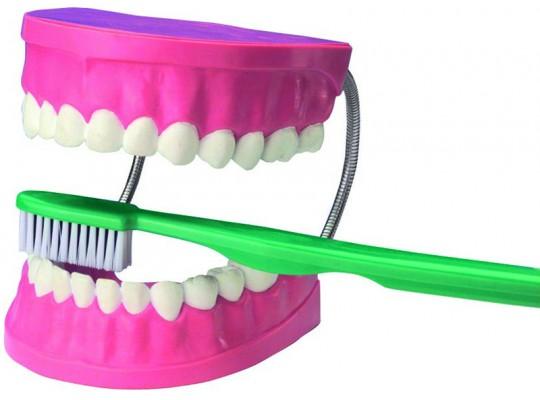 Model čištění zubů