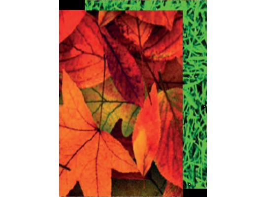 Fotokarton-300g/m2-listy/tráva-50x70cm