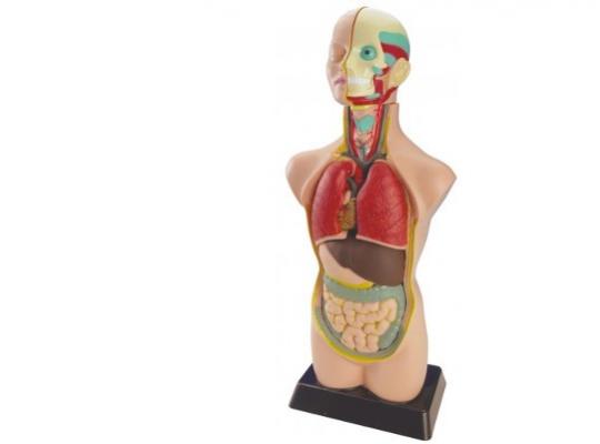 Mini torzo lidského těla